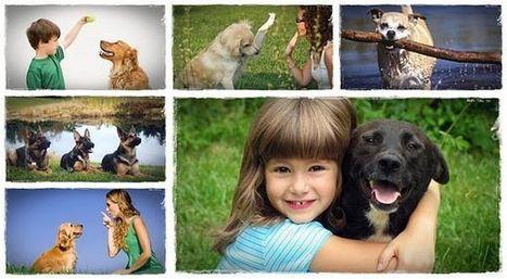 The numerous kinds of dog training salt lake city - My Glam Network | Dog training utah | Scoop.it