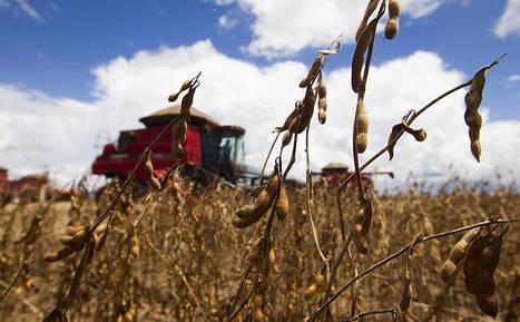 Exportações de soja brasileira para China sobem 300% em novembro | Lucas do Rio Verde | Scoop.it