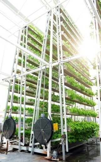 Vertical Farming Is Key to the Smart Cities of the Future | Trends in Sustainability | Scoop.it