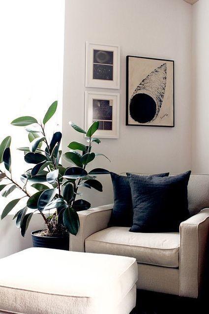 Algerian Ivy- wonderfully wild interior landscaping optio | Artificial Outdoor Plants | Scoop.it