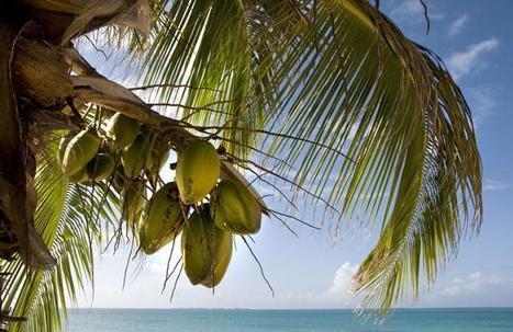 L'eau de coco, la boisson miracle qui séduit à Cannes | agroalim_distrib | Scoop.it