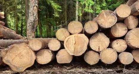 Faisons tout pour valoriser notre ressource en bois | Approvisionnement et Première Transformation | Scoop.it