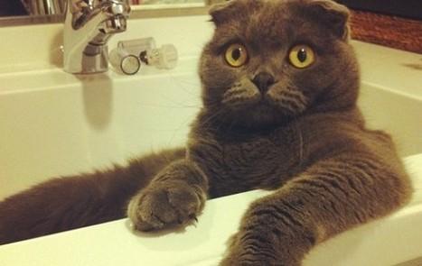 Instagram : comment la vidéo va tuer les chats mignons | Les chats c'est pas que des connards | Scoop.it