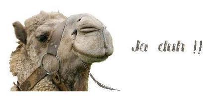 Leuk  humor   ,Schitterende moppen !    ff lachen   Lachen is gezond   Scoop.it