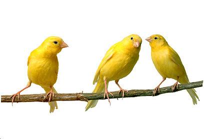 Maximise then Optimise Face-to-Face Communication   AgileSweet   Agile SE   Scoop.it