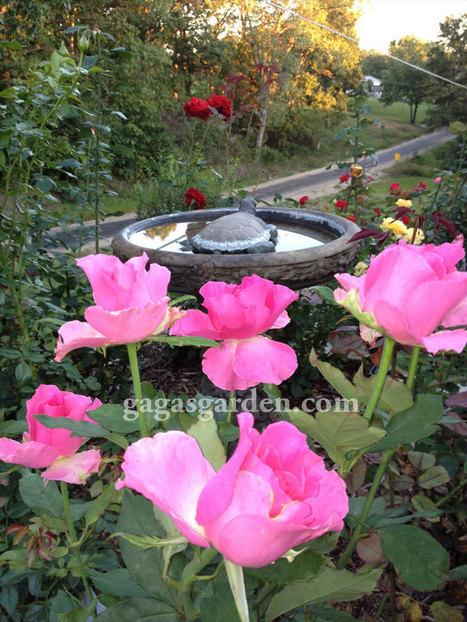 Roses Rain Fall   Gaga's Garden   Annie Haven   Haven Brand   Scoop.it