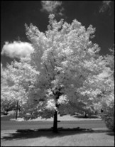 Infrared Filter Choices | Kolari Vision Infrared | AB Design Fotos | Scoop.it
