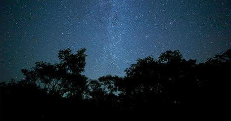 Les arbres dorment-ils durant la nuit ? | De Natura Rerum | Scoop.it