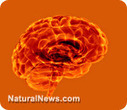 Gluten attacks the brain and damages the nervous system | Gluten Free Living | Scoop.it