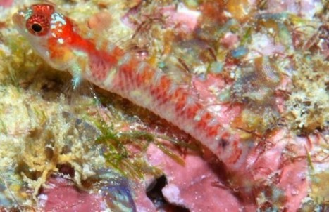 Country's First New Species of Fish Discovered | Amocean OceanScoops | Scoop.it