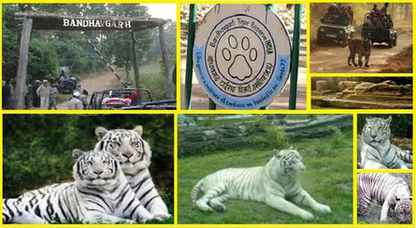 Ranthambore National Park Safari Tours: Exploring The Best Tiger Safaris in India   Safaris in India & Africa   Scoop.it