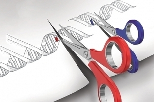 Speeding up gene discovery   Synthetic Biology   Scoop.it