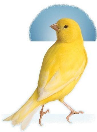 Home | Bird Food Facts | Parrot Partner | Scoop.it