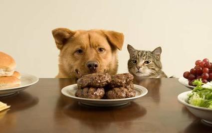 Spendiamo quasi due miliardi in cibo per cani e gatti | Italica | Scoop.it