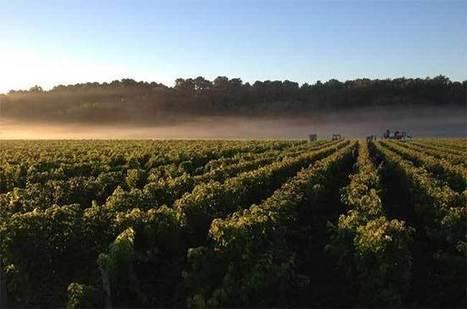 Bordeaux 2016 reds: Dry skies mean waiting game - Decanter   Planet Bordeaux - The Heart & Soul of Bordeaux   Scoop.it