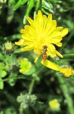 Study Is More About The Bees Than The Trees   College of Natural Resources News   North Carolina Agriculture   Scoop.it