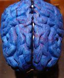 Descubren cómo ralentizar el envejecimiento del cerebro   Noticias de ciencia   Scoop.it