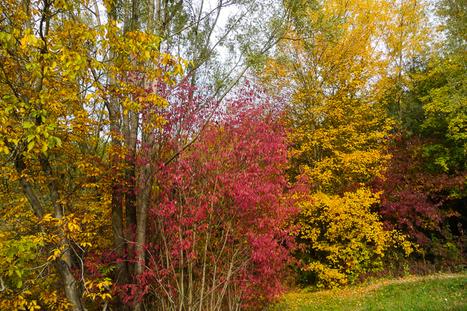 L'automne nous offre sa palette | The Blog's Revue by OlivierSC | Scoop.it