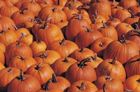 Recycled Halloween pumpkins can be used in various ways   The Miracle of Fall   Scoop.it