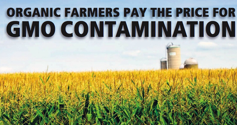 Survey Shows Organic Farmers Pay the Price for GMO Contamination | EcoWatch | Sustain Our Earth | Scoop.it
