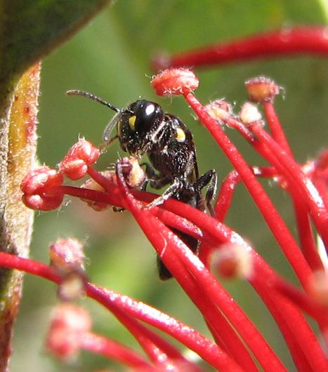 Pollinators, Predators and Pests - Ooooby | Natural Pest Control | Scoop.it