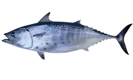 Cut risk of death from heart disease by eating more omega-3 rich tuna | Public Health, Health Promotion and Disease Prevention | Scoop.it