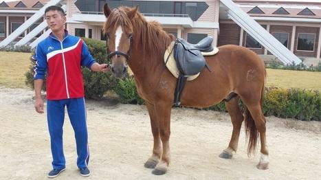 Corée du Nord : le voile se lève enfin sur un cheval méconnu - Les Biodiversitaires | Cheval | Scoop.it