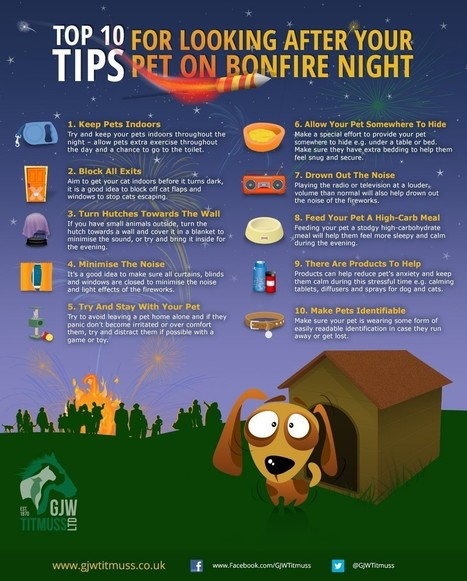 Top 10 Tips to Look after Pets in Bonfire Night | All Infographics | All Infographics | Scoop.it