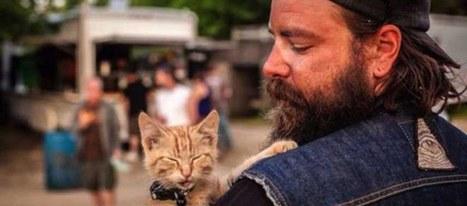 Il sauve un chat abandonné et l'emmène en roadtrip avec lui | CaniCatNews-actualité | Scoop.it