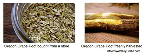 Methow Valley Herbs: 9 Reasons Why Herbs Might Not Work | D.I.Y. Herbalism | Scoop.it