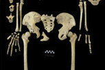 Human body has gone through four stages of evolution | Views of Evolution | Scoop.it