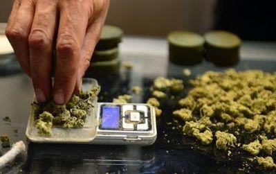 Groen licht voor 'mediweed' | Medicinale-cannabis | Scoop.it