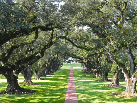 My 7 Super Shots: Oak Alley | Oak Alley Plantation: Things to see! | Scoop.it
