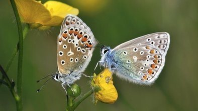 Set back for 'licence to trash' plan | Financing Nature Conservation | Scoop.it
