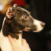 'Phoenix's law' would double penalties for animal cruelty - Buffalo News   Animal Cruelty   Scoop.it