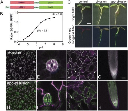 J. Exp. Bot. - Live imaging of intra- and extracellular pH in plants using pHusion, a novel genetically encoded biosensor | Plant Cell Biology and Microscopy | Scoop.it