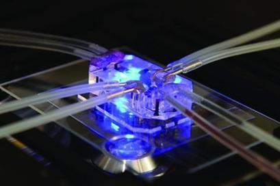 Lung-on-a-chip device could reduce animal drug testing | News | The Engineer | National Centre for the 3Rs in the news | Scoop.it