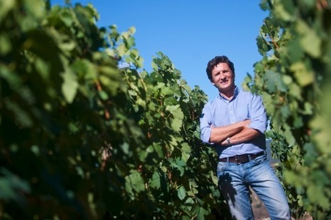 Palacios 'has made Spain's best white' | Travel Northern Spain | Scoop.it