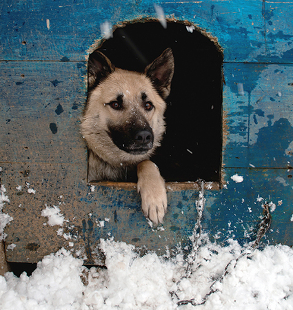Keep Animals Safe and Warm This Winter - Animal Legal Defense Fund | Introduce new course in schools called COMPASSION | Scoop.it
