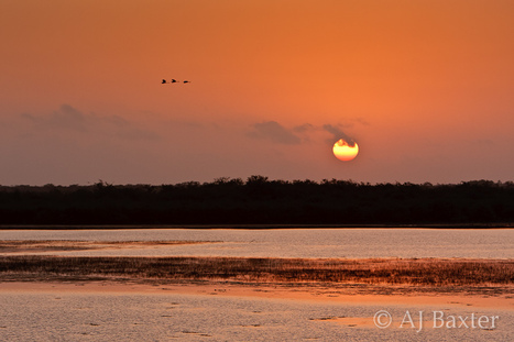 Sunrise Over the Lagoon, Crooked Tree | Belize in Social Media | Scoop.it