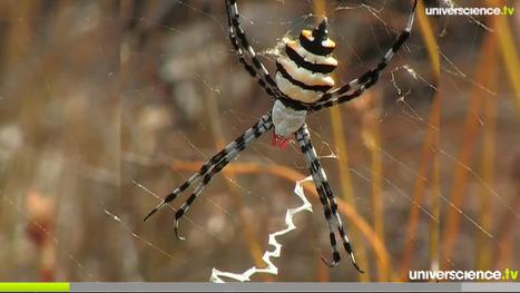 Une question d'écologie   EntomoScience   Scoop.it