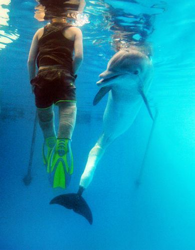 Both wearing prosthetic flippers, boy and dolphin swim and bond   Medical Engineering = MEDINEERING   Scoop.it
