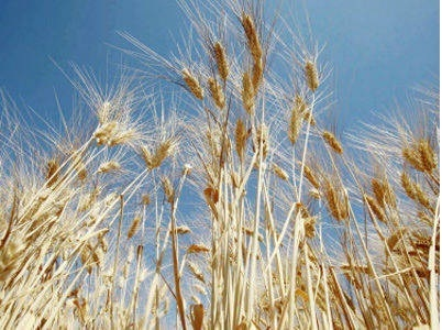 17,000 tonnes of grain wasted in 3 years   Right to Information   Scoop.it