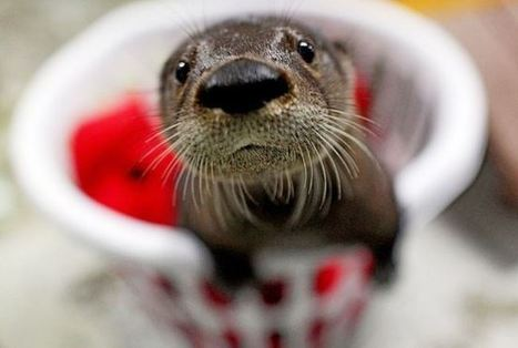 25 of The Cuttest Otters of the Globe | Animals | Scoop.it