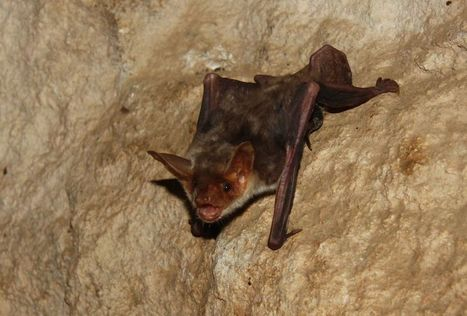 Bats Use Polarized Light As a Nighttime Compass | Why Nature Matters | Scoop.it