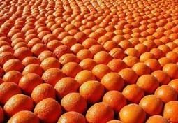 Arancia Rossa, un pieno di antiossidanti | Sapori di Sicilia | web marketing | Scoop.it