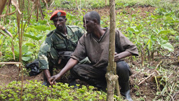 Trading conflict for coffee in DRC | Archive | Scoop.it