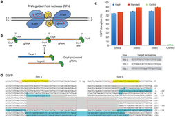 Dimeric CRISPR RNA-guided FokI nucleases for highly specific genome editing : Nature Biotechnology : Nature Publishing Group | Genome Engineering | Scoop.it