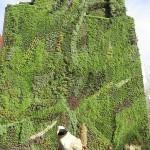 Green Roofs & Green Walls Market Expected to Surge to $7.7 billion by 2017 | Krachten die de bouw gaan innoveren | Scoop.it