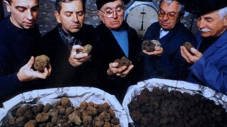 La truffe du Périgord est provençale - La Provence | dordogne - perigord | Scoop.it